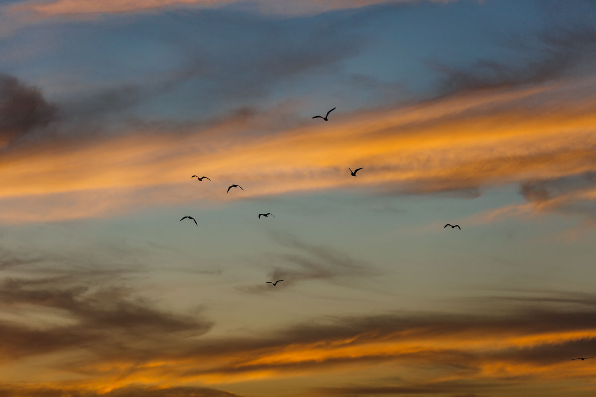 PortArlington-WilliamWattPhotography-24